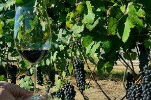 [SP] Badalada vinícola paulista Guaspari abre vinhedos à visitação e lança novo rótulo